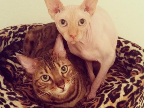 Dina Ratajec: Mili i Sevan nakon napornog dana
