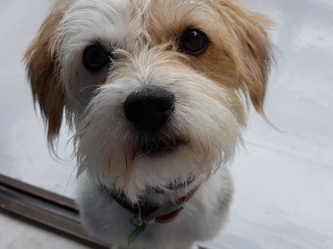Lorinczi Francisc: #Lordi the Half Blood Terrier