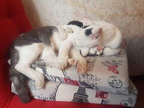 Kristina Stevanovic: Nase male drugarice mace  :D