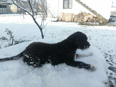 Ивана Мариновић: Nas mezimac obozava sneg
