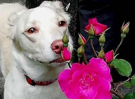 Mira Validžić: <p>Ah kako lijepo mirišu ove ružice. kaže naša mala Flora</p>
