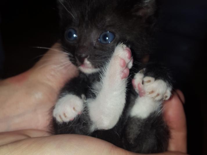 Acești ochișori albaștri, cu care voi descoperi lumea, merită un like!