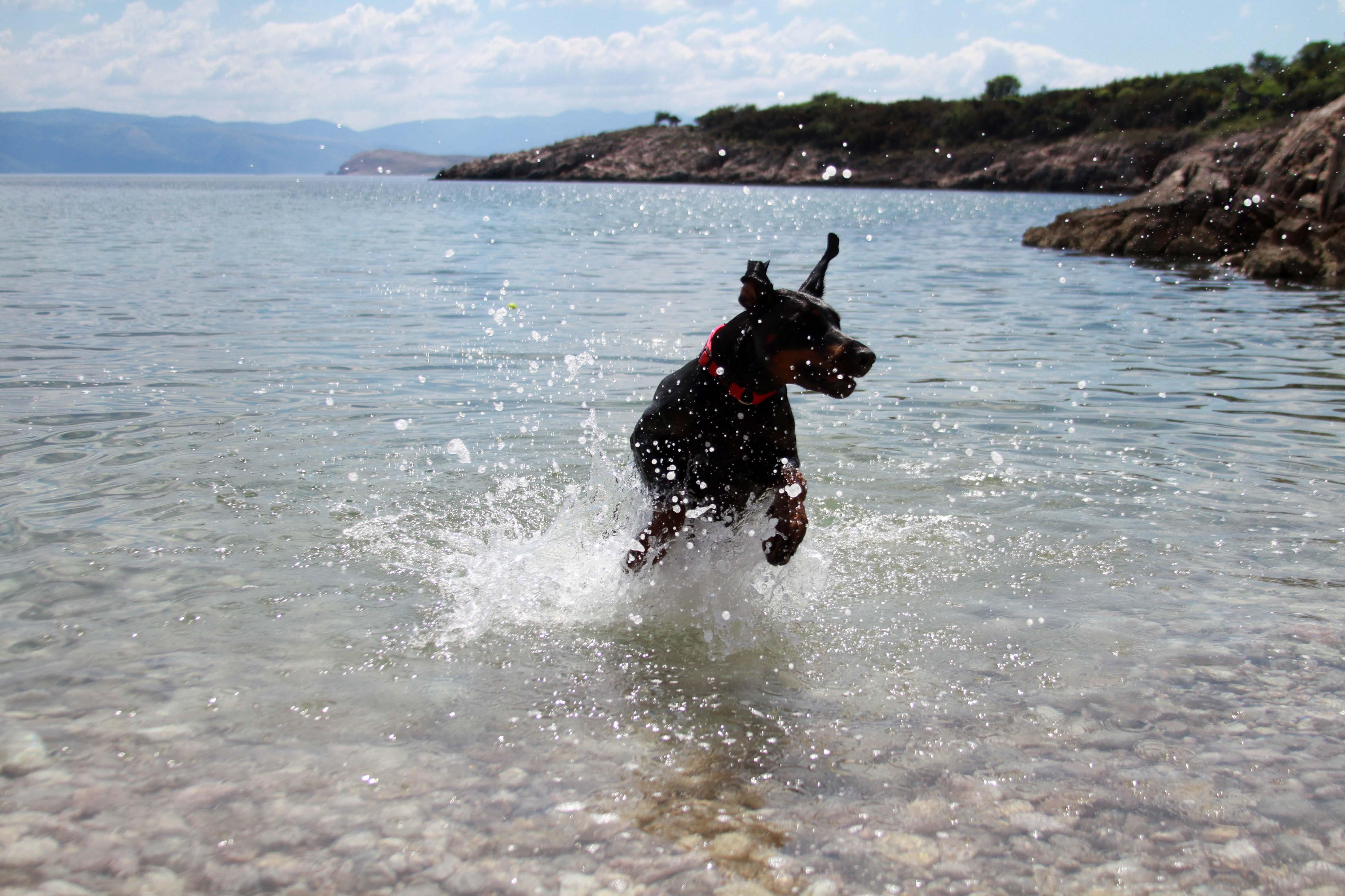 Ljuba voli ljeto, more i kupanje!