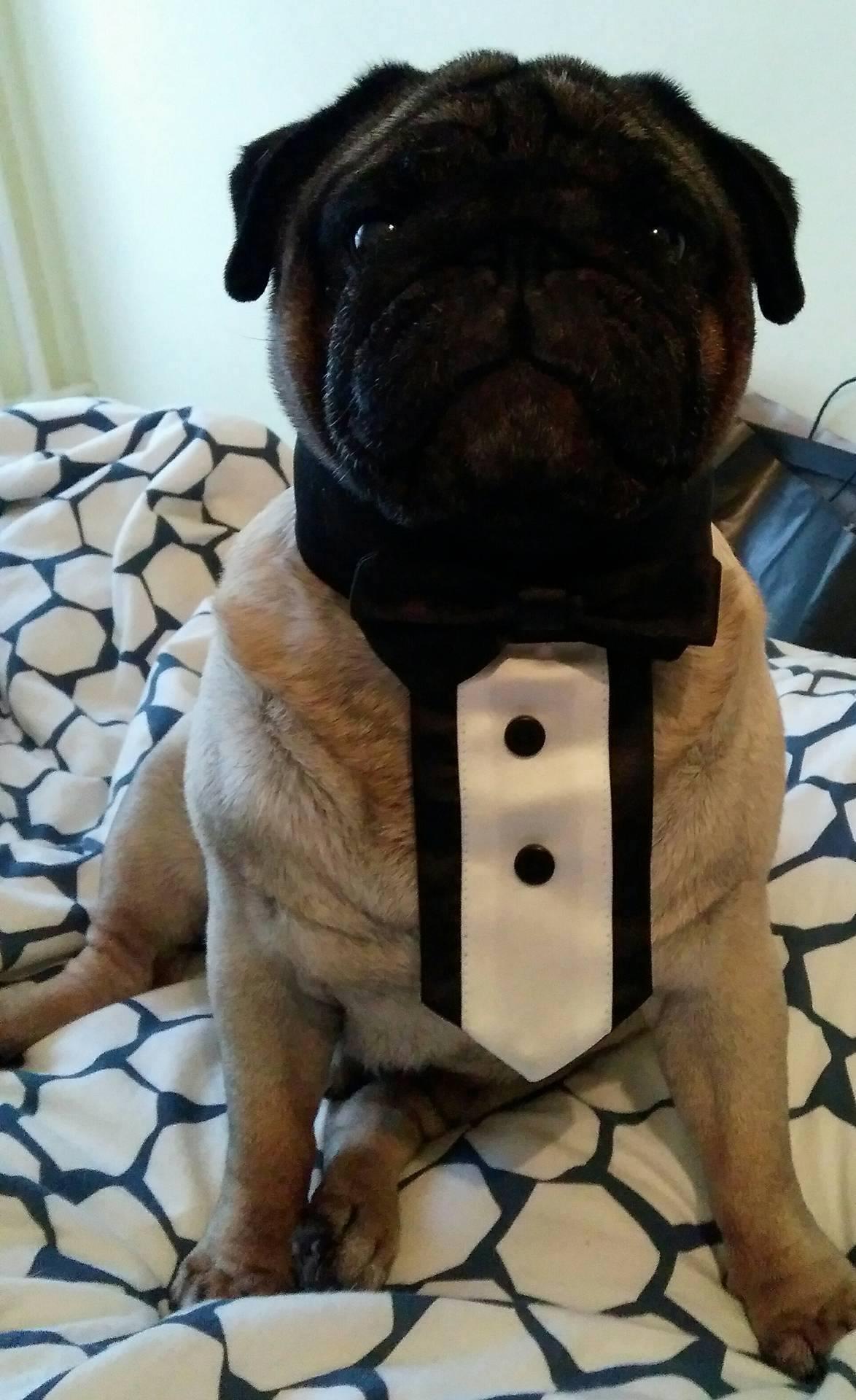 Spreman za svatove <3